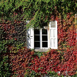 Autumn has us surrendered by Ciprian Apetrei - Buildings & Architecture Architectural Detail ( window, colorful, autumn, brittany, leaves )