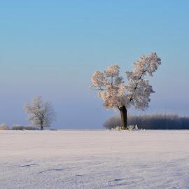 by Eugenija Seinauskiene - Landscapes Weather