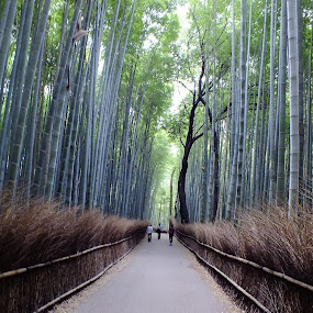 by Indra Fardhani - Landscapes Travel ( bamboo, japan, kyoto, perspective, garden, arashiyama,  )