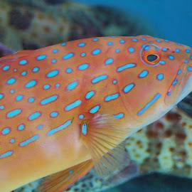 Fish #2 by Koh Chip Whye - Animals Fish (  )