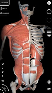 Muscular System - 3D Anatomy screenshot for Android