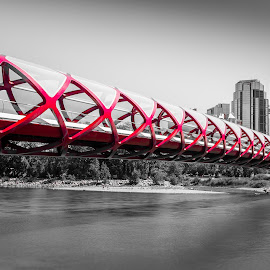Beautiful Peace Bridge  by David Kotsibie - Buildings & Architecture Bridges & Suspended Structures ( water, landmark, canada, alberta, calgary, bridge, architecture, bridges, river )