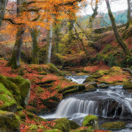 Autumn in Faerieland nov 2017 by Paul Holmes - Landscapes Waterscapes ( wicklow, faerieland, ireland, lx7 )