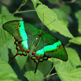 Emerald  by Deleted Deleted - Animals Insects & Spiders