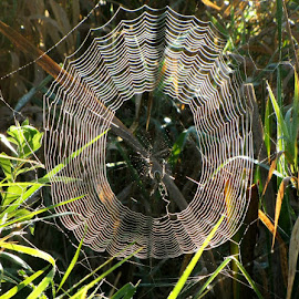 by Sandy Fetter - Nature Up Close Webs