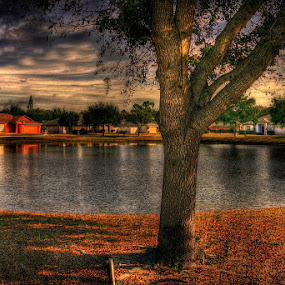 My Neighbourhood by Jeremy Barton - City,  Street & Park  Neighborhoods ( houses, hdr, florida, trees, lake, sarasota )