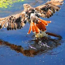by David Smith - Novices Only Wildlife