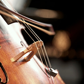 Cello by Barrock Adji - Novices Only Objects & Still Life ( canon, music, image, still, nikon, cello )