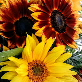 by Jolene Schack Dommer - Flowers Flowers in the Wild