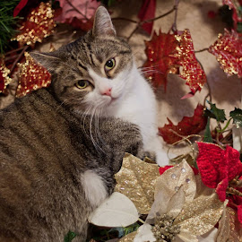 Festive Pussy. by Simon Page - Animals - Cats Portraits