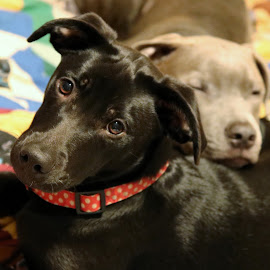Cuddlepups by Jak Conrad - Novices Only Pets ( love, puppies, puppy, cuddle, sleep )