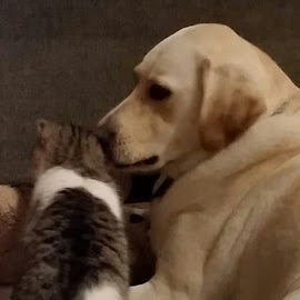 Wanna hear a secret? by Kathy Psencik - Animals Other Mammals ( cat, secrets, dog, talking to each other., dog and cat, cat and dog )
