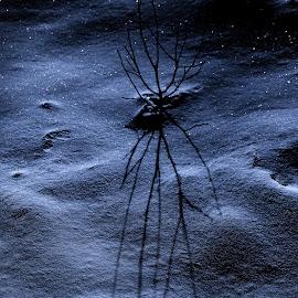 by Janez Šturm - Nature Up Close Trees & Bushes