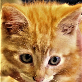 Amos Moses  by Linda    L Tatler - Animals - Cats Kittens