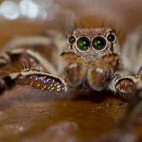 eyes by Aravindh Ganesh - Animals Insects & Spiders (  )