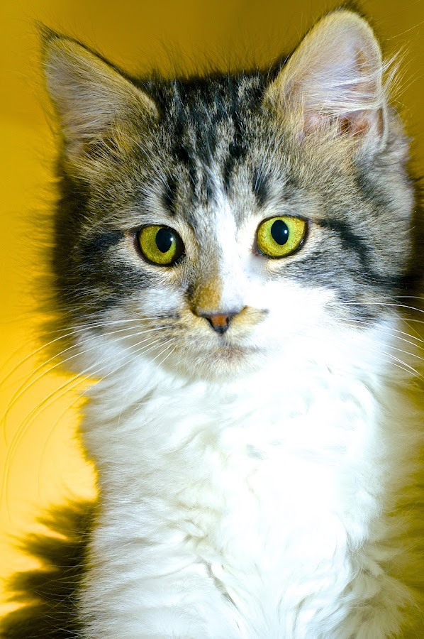 Little Neoma at the Shelter by Martha Pope - Animals - Cats Portraits