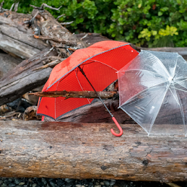 Rain on the Beach by Darren Sutherland - Artistic Objects Still Life (  )