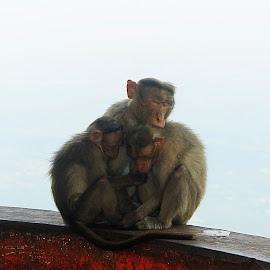 by Swamy Sk - Animals Other Mammals