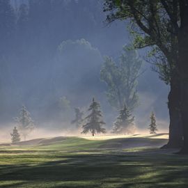 Play Misty by Paul Judy - Landscapes Prairies, Meadows & Fields ( hills, golf course, fog, california, trees, mist )
