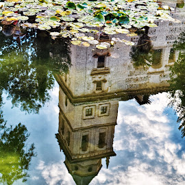 Reflecting... by Nelida Dot - Buildings & Architecture Public & Historical ( reflection, artistic, architectural, building, water lily )