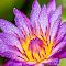 IMG_7460-Edit.jpg