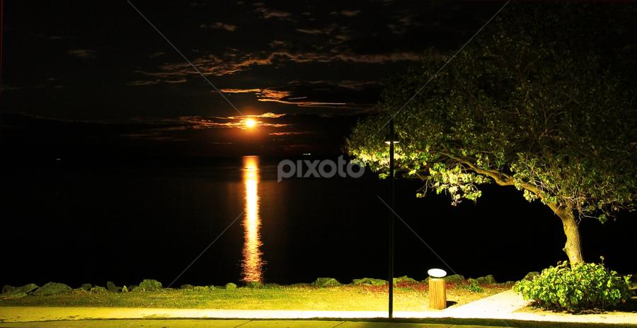 Moon Gazing at the Park by Ellen Foulds - Landscapes Starscapes ( moon, woody point, travel, landscape, city park )
