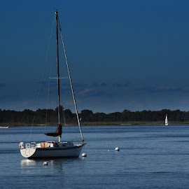 Sailboat  by Lorraine D.  Heaney - Transportation Boats