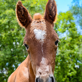 Candy says, Hello! by Sarah Sullivan - Animals Horses