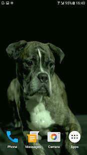 Dogs In Slow Motion Video - screenshot