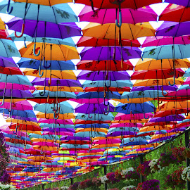 Garden Umbrellas by Alvin Andre - Artistic Objects Still Life ( shades, umbrellas, dubai, colors, uae, artistic object, flowers, garden, shadows )