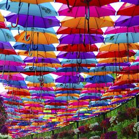 Garden Umbrellas.jpg