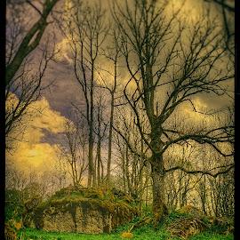 Orwostalgie by Petr Klingr - Landscapes Forests ( clouds, hdr, orwo, trees, nostalgic )