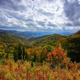 Fall Color, Newfound Gap by Jonathan Wheeler - Landscapes Mountains & Hills ( fall leaves, fall colors, great smoky mountains national park, appalachian beauty, tennessee mountains )