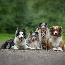 my own packs of dogs by 'Monique Smit - Animals - Dogs Portraits