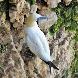 by Rob Willis - Animals Birds