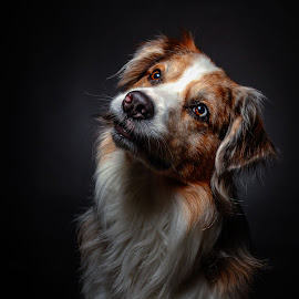 Bandit by Geo Toth - Animals - Dogs Portraits