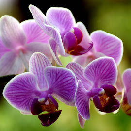 orchid by SANGEETA MENA  - Flowers Flowers in the Wild