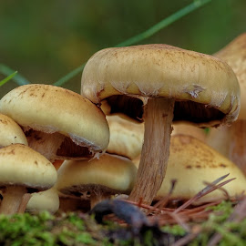 by Bojan Bilas - Nature Up Close Mushrooms & Fungi