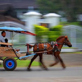 Pegasus by Budi Risjadi - Transportation Other