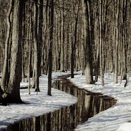 On sent le printemps !! by Claude Desrosiers - Uncategorized All Uncategorized ( water, trees, forest, spring )