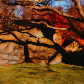 Shadow Play by Dave Walters - Nature Up Close Trees & Bushes ( fall, nature up close, abstract, colors, digital art )