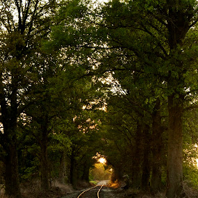 Light at the end of the tunnel by Chris Taylor - Transportation Trains ( railroad tracks, leading lines, trees, transportation, sunlight )