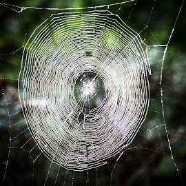The Trap is Ready by Gary Hanson - Nature Up Close Webs ( ukraine, kanev, supper, web, spider, trap )