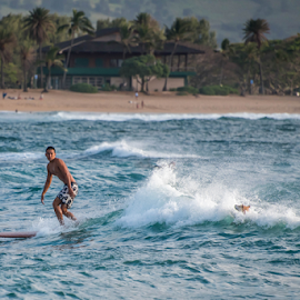 Surfer dog by Darren Sutherland - Sports & Fitness Surfing ( north shore beach, hawaii 2015 )
