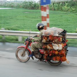 Chickens transport in Viet Nam by Isabelle Ebens - Transportation Motorcycles ( motorcycle, vietnam, chickens, transportation, roads )