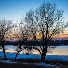 Evening Falls  by Chad Roberts - Nature Up Close Trees & Bushes ( winter, cold, sunset, snake river, sundown, trees, skeleton, evening, river )