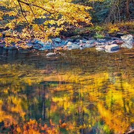 Reflections by Carol Ward - Landscapes Waterscapes ( tn, fall colors, autumn, great smoky mountains national park, reflections, trees, smoky mountains )