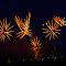 2048 jpg Firework  Mar-18-1.jpg