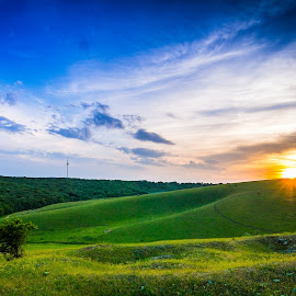 by Paul Coev - Landscapes Prairies, Meadows & Fields ( praririe, single, tree, grass, green, sunset, trere, spring, alone, colours )