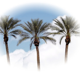 Sky High Palm Trees by Ken Mickel - Nature Up Close Trees & Bushes ( palm tree, palm trees )